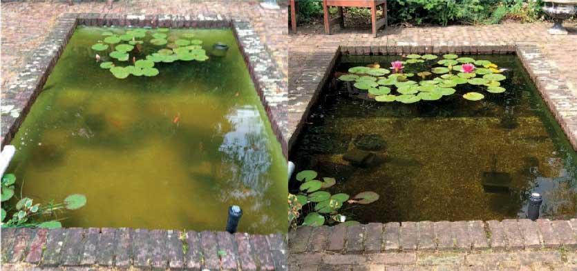 Quantum zero energia for Vasca pesci rossi giardino